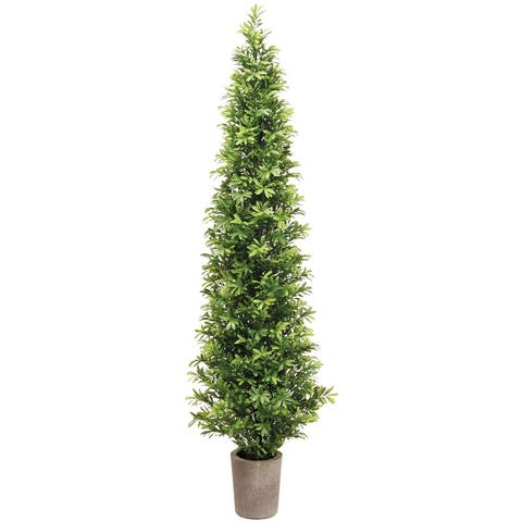 35 Inch Tall Podocarpus Topiary Tree in Cement Pot - 35 X 12 X 12 inches
