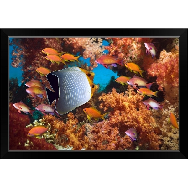 """""""Coral reef scenery with fish"""" Black Framed Print"""