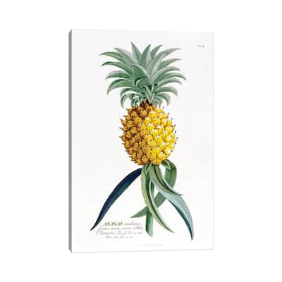 "iCanvas ""Ananas (Pineapple)"" by Georg Dionysius Ehret Canvas Print"