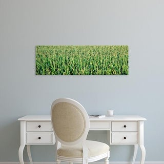 Easy Art Prints Panoramic Images's 'Corn crop in a field, Iowa, USA' Premium Canvas Art