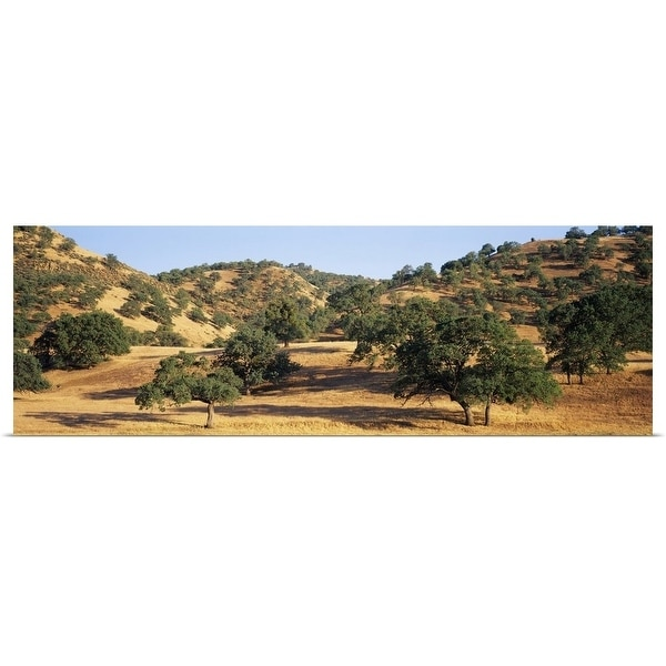 """Oak trees on hill, Stanislaus County, California"" Poster Print"