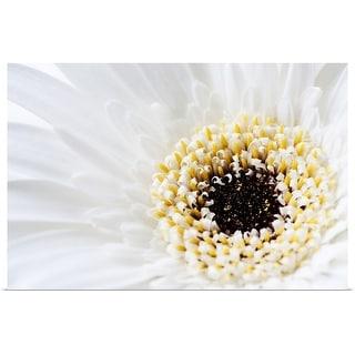 """Close up of Gerbera flower head"" Poster Print"