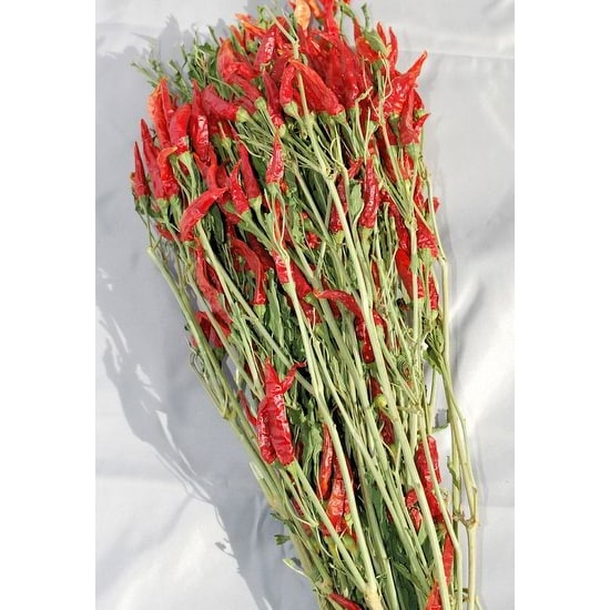 Dried Red Chili Peppers Bunch Red & Green 15-18in. long, Amount Large 6 oz bunch -- Case of 20 bunches - Red & Green. Opens flyout.