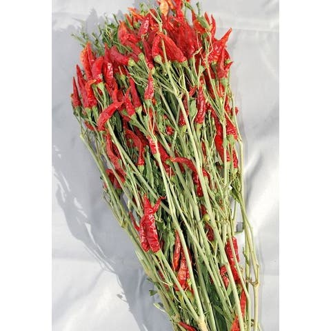 Dried Red Chili Peppers Bunch Red & Green 15-18in. long, Amount Large 6 oz bunch -- Case of 20 bunches - Red & Green