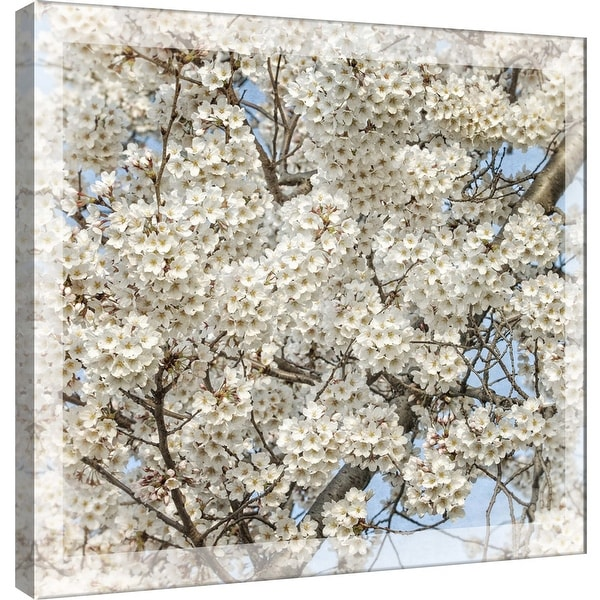 """PTM Images 9-101246 PTM Canvas Collection 12"""" x 12"""" - """"Cherry Blossoms 7"""" Giclee Cherry Blossoms Art Print on Canvas"""