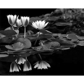 ''Reflections on Water'' by Dennis Frates Floral Art Print (8 x 10 in.)