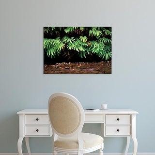 Easy Art Prints Gavriel Jecan's 'Fern Canyon' Premium Canvas Art