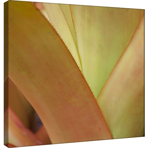 "PTM Images 9-101237 PTM Canvas Collection 12"" x 12"" - ""Tropical Succulent"" Giclee Succulents Art Print on Canvas"