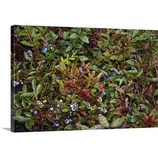 """Blueberries on bush, Massachusetts"" Canvas Wall Art"