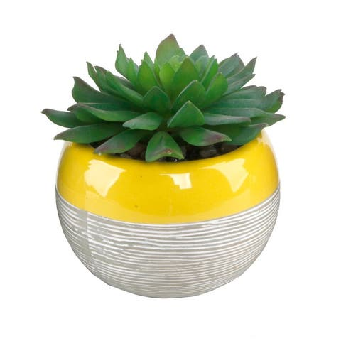 Succulent in Two tone lines pattern ceramic pot ,Teal - ONE-SIZE