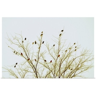 """""""Cardinals on tree against sky."""" Poster Print"""