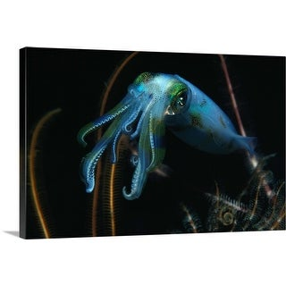 """Reef Squid"" Canvas Wall Art"
