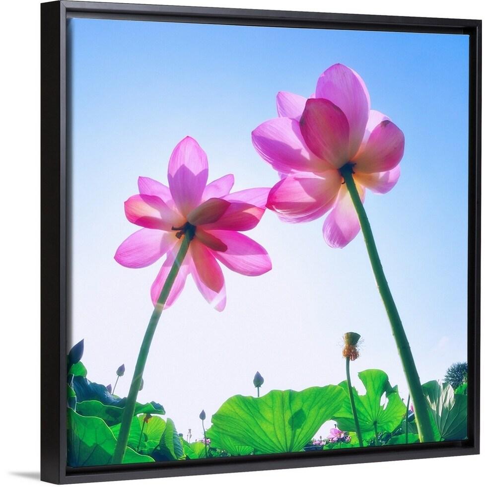 Shop Haraichi Numa Lotus Garden In Ageo City Saitama Prefecture Japan Black Float Frame Canvas Art Overstock 25531973