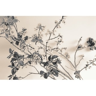 Flowers Photograph Art Print