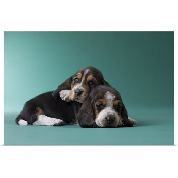 """""""Two Basset Hound Puppies"""" Poster Print"""