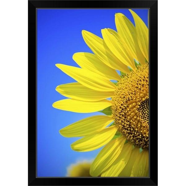 """""""Sunflower against blue sky."""" Black Framed Print"""