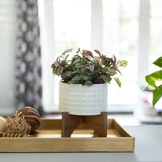 "Link to Mid-Century 4.75"" CERAMIC GLADIATOR Planter on Wood Stand ,Matte White Similar Items in Planters, Hangers & Stands"