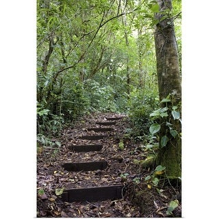 """""""Steps ascending on path, Tropical Cloud Forest, Costa Rica"""" Poster Print"""