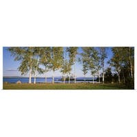 Poster Print entitled Trees along a lake, Moosehead Lake, Maine - multi-color