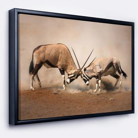 Designart 'Gemsbok Antelopes Fighting' African Framed Canvas Wall Art