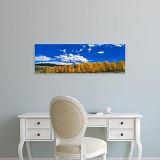 Easy Art Prints Panoramic Images's 'Low angle view of Aspen trees, Colorado, USA' Premium Canvas Art