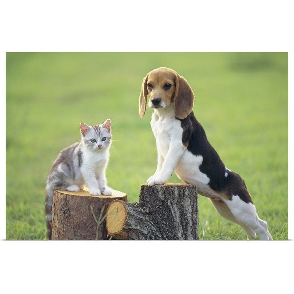 """Beagle and Cat"" Poster Print"
