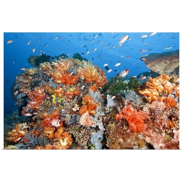 """""""Healthy reef structure, Komodo National Park, Indonesia."""" Poster Print"""