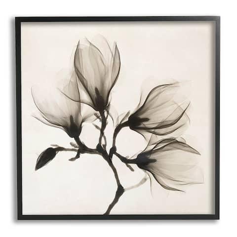 Stupell Industries Sepia Tone Tree Blossom Florals Translucent Flowers Framed Wall Art - Black