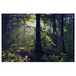 """""""Sunbeams in dense forest, Great Smoky Mountains National Park, Tennessee"""" Poster Print"""