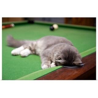 """Kitten playing on pool table."" Poster Print"