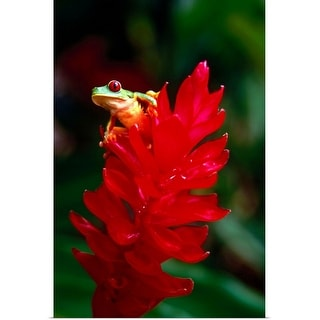 """""""A red-eyed tree frog"""" Poster Print"""
