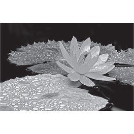 ''Droplets on Water Lily'' by Dennis Frates Floral Art Print (8 x 10 in.)