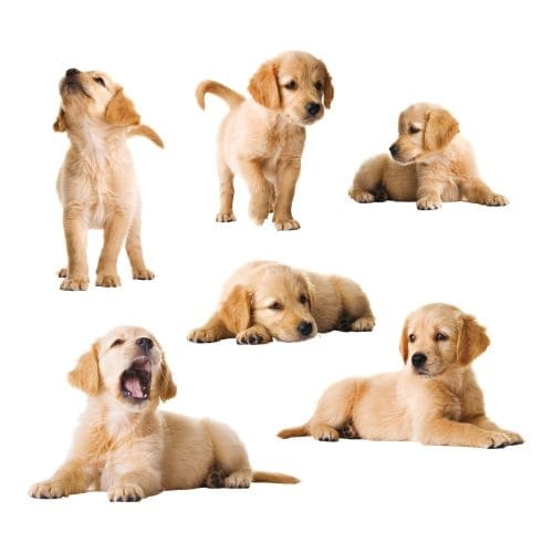 Brewster CR-54252 Kid's Puppies Wall Decals - N/A