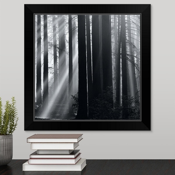 """Sunlight in forest"" Black Framed Print"