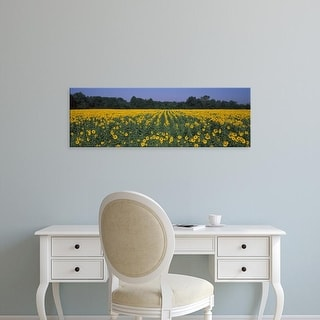 Easy Art Prints Panoramic Images's 'Sunflower field in bloom, Marion County, Illinois, USA' Premium Canvas Art