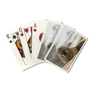 Walrus - Lantern Press Photography (Poker Playing Cards Deck)