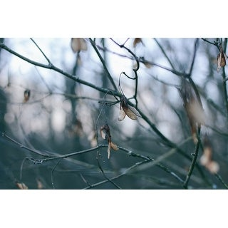 Nature & Branches Photograph Art Print