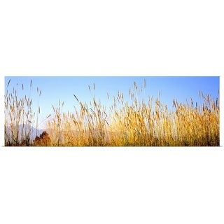 """""""Tall grass in a national park, Grand Teton National Park, Wyoming"""" Poster Print"""