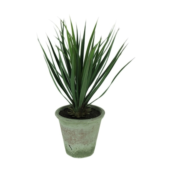 Yucca Plant in Clay Pot 26.5 Inch Tall - 26.5 X 8.5 X 8.5 inches