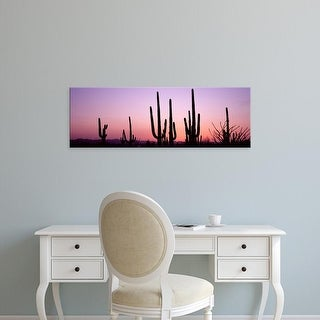 Easy Art Prints Panoramic Image 'Saguaro cacti, Saguaro National Park, Tucson, Pima County, Arizona' Canvas Art