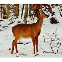 Baby Deer Photograph Wall Art Canvas