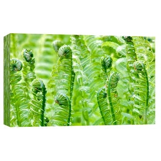 """PTM Images 9-102171  PTM Canvas Collection 8"""" x 10"""" - """"Spring Ferns"""" Giclee Ferns Art Print on Canvas"""