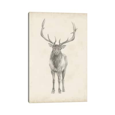 "iCanvas ""Elk Study"" by Ethan Harper Canvas Print"
