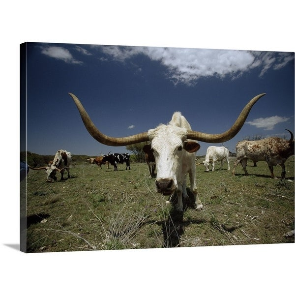 Shop Premium Thick Wrap Canvas Entitled Herd Of Texas