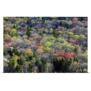 Poster Print entitled High angle view of Appalachian hardwood forest, Blue Ridge Parkway, spring, North Carolina