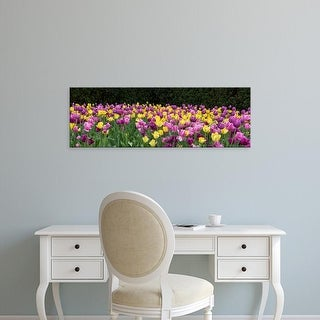 Easy Art Prints Panoramic Image 'Tulip flowers in a garden, Chicago Botanic Garden, Glencoe, Illinois' Canvas Art