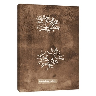 """PTM Images 9-105807  PTM Canvas Collection 10"""" x 8"""" - """"Natural Forms Sepia 7"""" Giclee Seaweed Art Print on Canvas"""