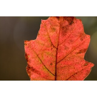 Red Leaf Portrait Photograph Wall Art Canvas (More options available)