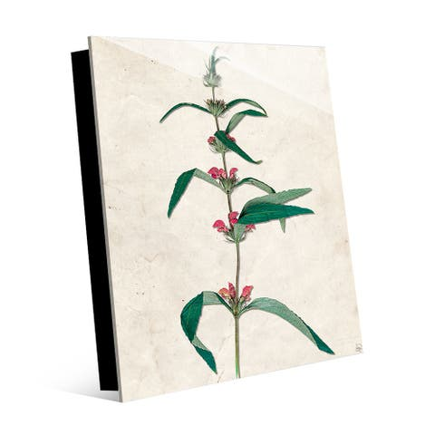 Kathy Ireland Dry Red Buttonweed Flowers on Tan on Acrylic Wall Art Print