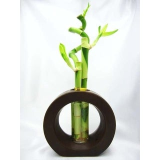 9GreenBox - Lucky 'Bamboo' Spiral Style w/ Brown Ceramic Vase